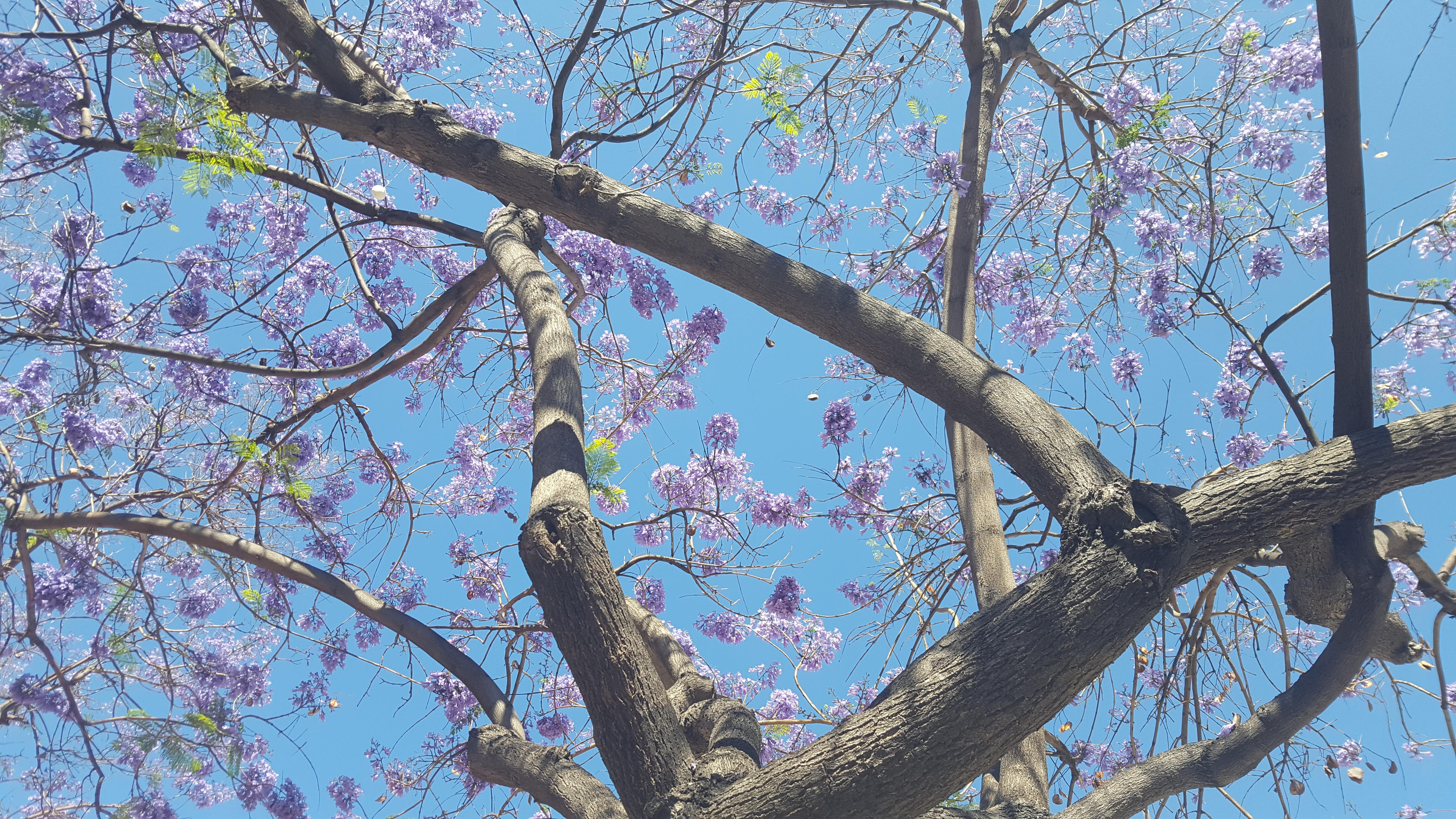 branchesandflowers